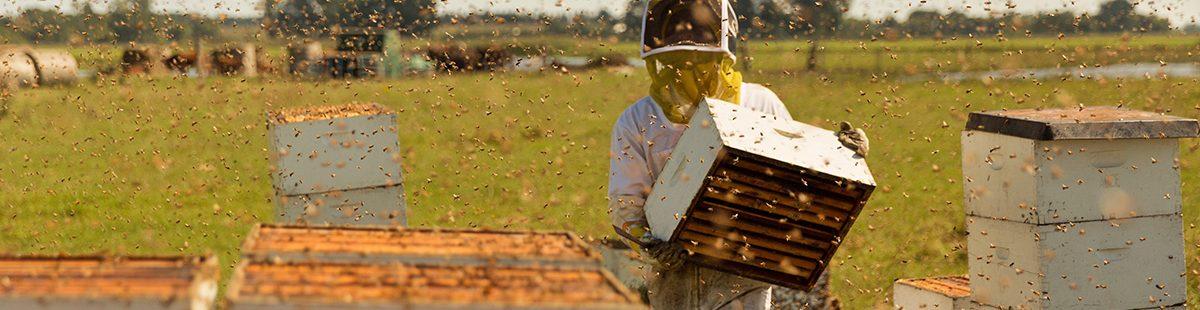 Pollinators-The